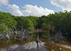 Mahahual Mangroves Forest: raise awareness for better conservation!