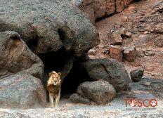 EN NAMIBIE, DES RANGERS POUR PROTEGER LA FAUNE