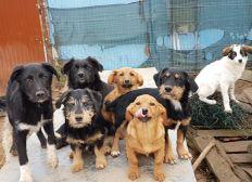 Cezar Welfare Projekt Shelterbau