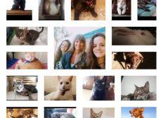Auswandern mit 17 Tieren - Emigrating with 17 animals