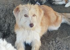 Hilfe für Mensch und Tier in Rumänien anderes Auto