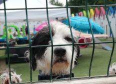Ensemble pour notre Centre Aéré Canin
