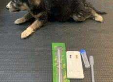 Tierarzt Schulden