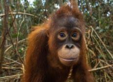 Primaten helfen Primaten: Jahrespatenschaft für Taymur