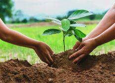 Je plante votre arbre, suivez son évolution, venez lui rendre visite!