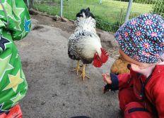 Gründung eines Bauernhofkindergartens