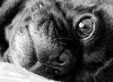 Emotional support dog vet fees