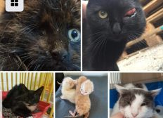 Aide aux soins baika chats