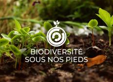 Biodiversité Sous Nos Pieds