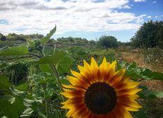 BIOPIC - Ferme biologique familiale en Picardie