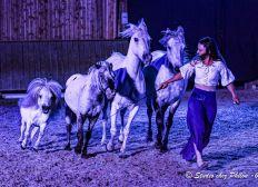 [COVID-19] Soutien à la troupe Libertad et à ses chevaux