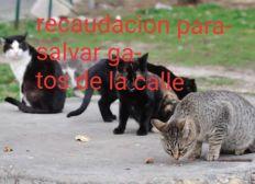 Recaudamos fondos para rescatar gatos de las calles