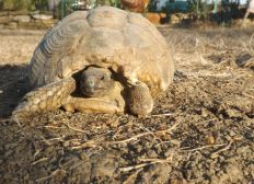 Help to provide better conditions for sick and injured tortoises recovery