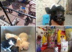 Frais des animaux 2021 / Pets bills 2021