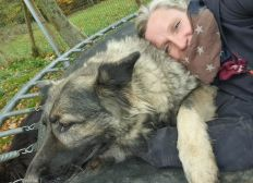 Sauvons Esprit Canin