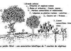 Plante un arbre!