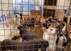 SAUVETAGE chiens des pays de l'Est / Rapatriement SPA de Belfort