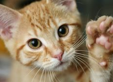 Bienestar felino