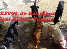 SOS REFUGE BENI KHIAR TUNISIE