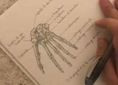 Dernière année d'étude d'ostéopathie pour Manon