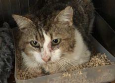 Soins vétérinaires Papachat, chat libre accidenté
