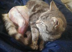 Opération de petit chat
