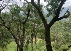 Création d'un partenariat agricole avec la communauté locale Sud Africaine de Lows Creek