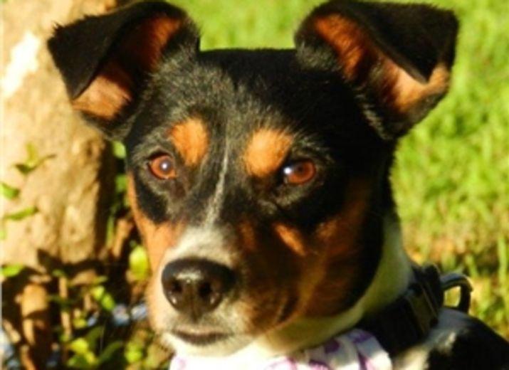 CANEJO - kleines Hundeleben hängt an einem seidenen Faden!