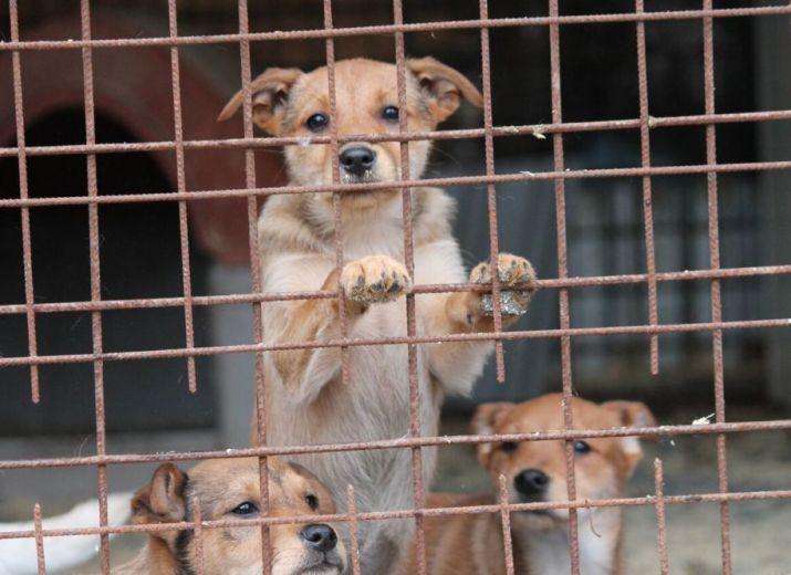 Futter für die 250 Hunde des Tierheimes in Cegléd/Ungarn