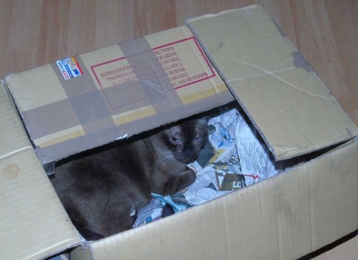 Foster cat Anais needs support!