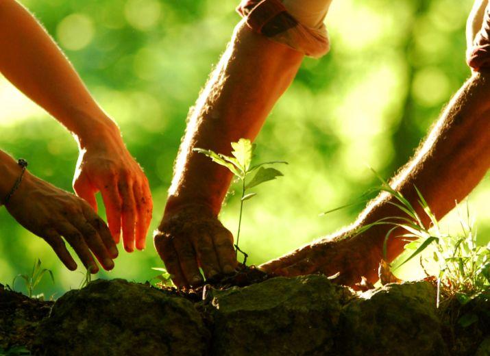 Parrainage des arbres - soutien financier au projet
