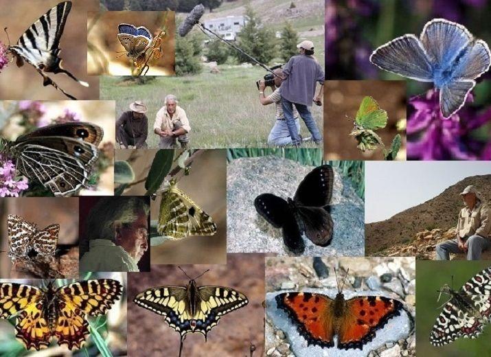Aidez-moi à immortaliser les derniers Papillons méditerranéens !