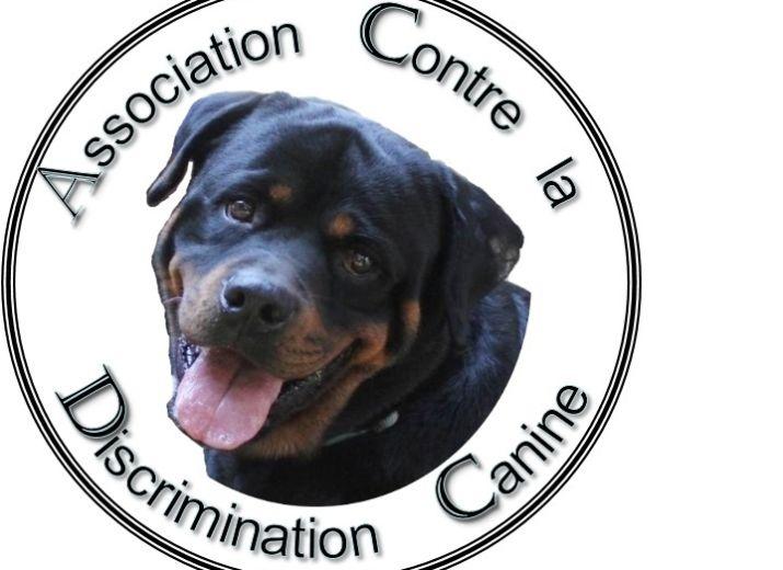 appel au don pour les soins vétérinaires des plus démunis