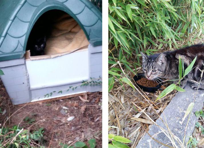 Nourrir, soigner, stériliser et identifier les chats des rues d'Emerainville Malnoue