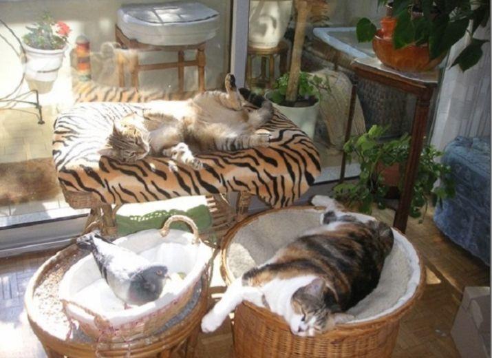 Solidarité pour nos animaux ailés et à quatre pattes  pour que l'Association puisse continuer d'exister