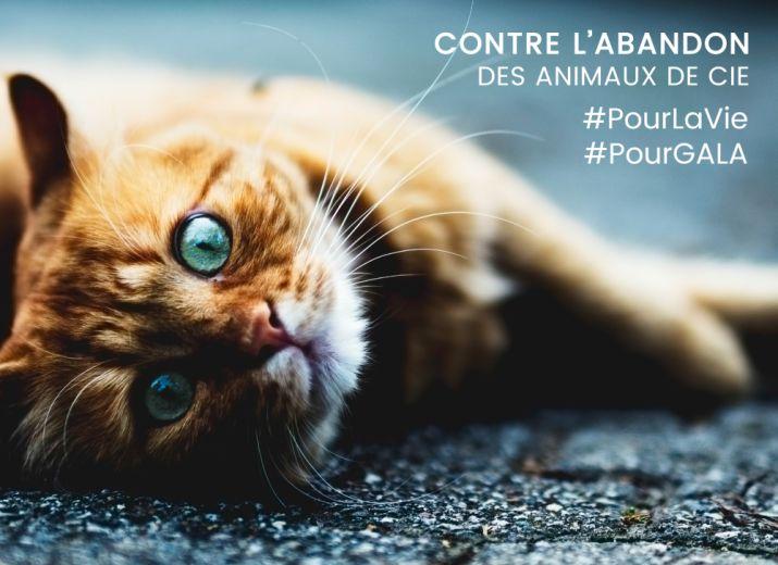 #PourLavie un don #PourGALA contre l'abandon des animaux de compagnie
