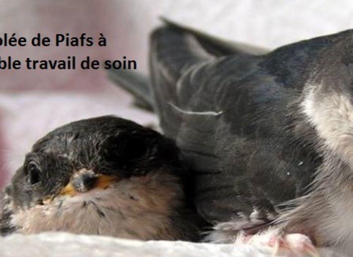Pour que Volée de Piafs continue à soigner les animaux de la faune sauvage