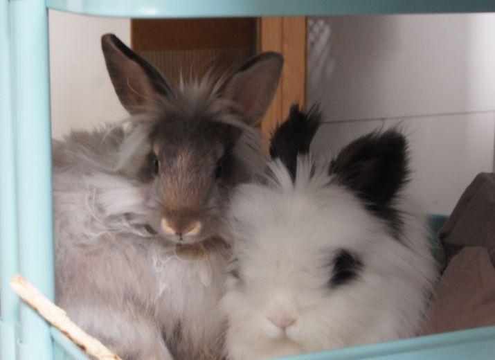 Jaya et Niyol aux urgences vétérinaire
