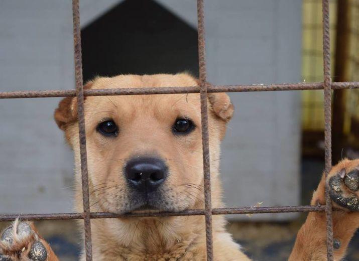 Hilfe/ Futterspenden für die Hunde in Ungarn und Griechenland