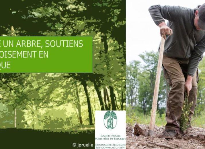 Cagnotte plante un arbre soutien le reboisement en for Plantes en ligne belgique