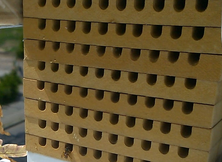 pool nisthilfen f r wildbienen zur umweltbildung. Black Bedroom Furniture Sets. Home Design Ideas