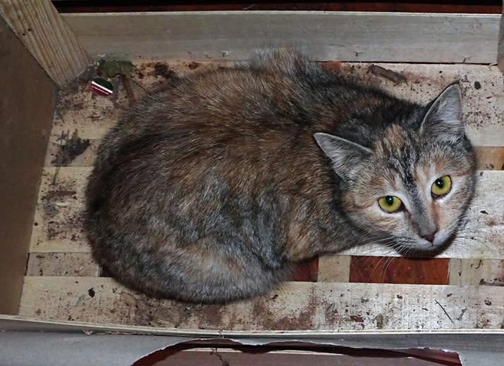 Hilfe für die verwaisten Katzen meiner Mutter