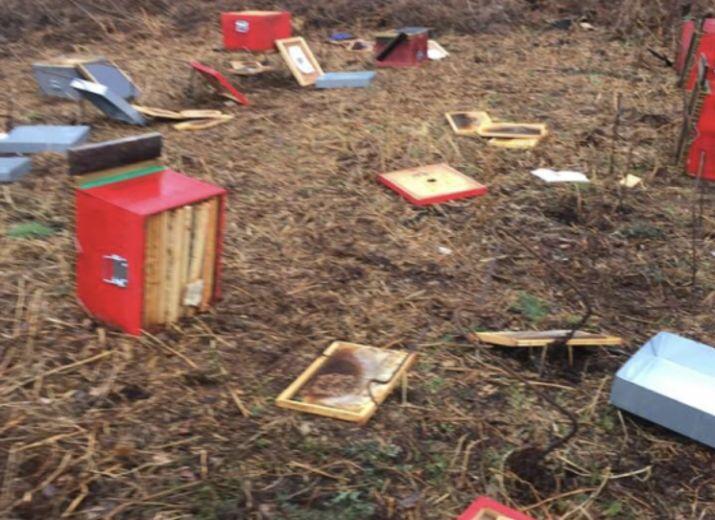 Aider Morbihan apiculture à remettre ses rucher en ordre