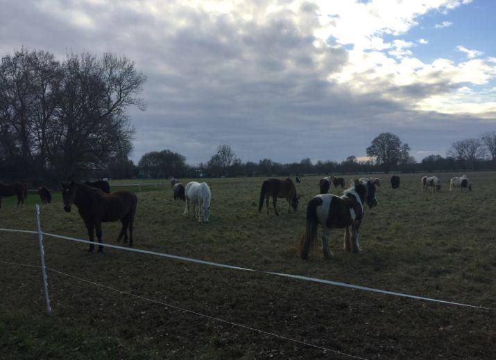 Retraites et soins des vieux poneys