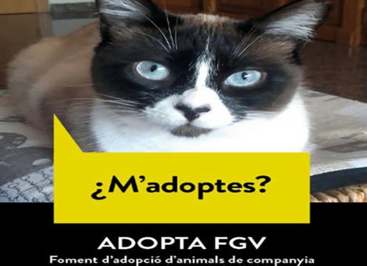 ADOPTA FGV