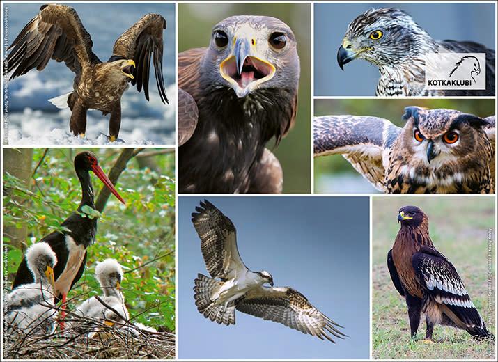 Support These Wonderful Birds
