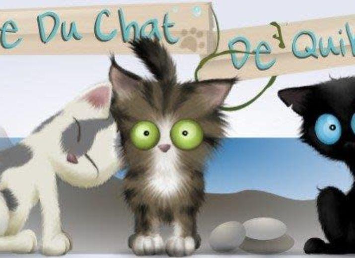 Aide pour les chats de l'Ecole du chat de Quiberon
