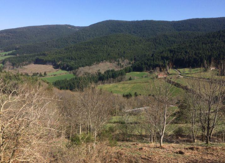 Sauvons la Forêt de Taillard