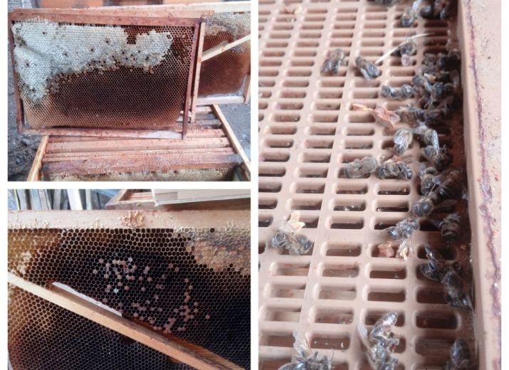 Soutien à un apiculteur, contre la disparition des abeilles