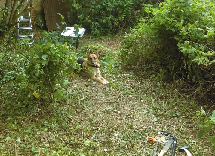 Projet pension - Box & clôture chiens et chatterie